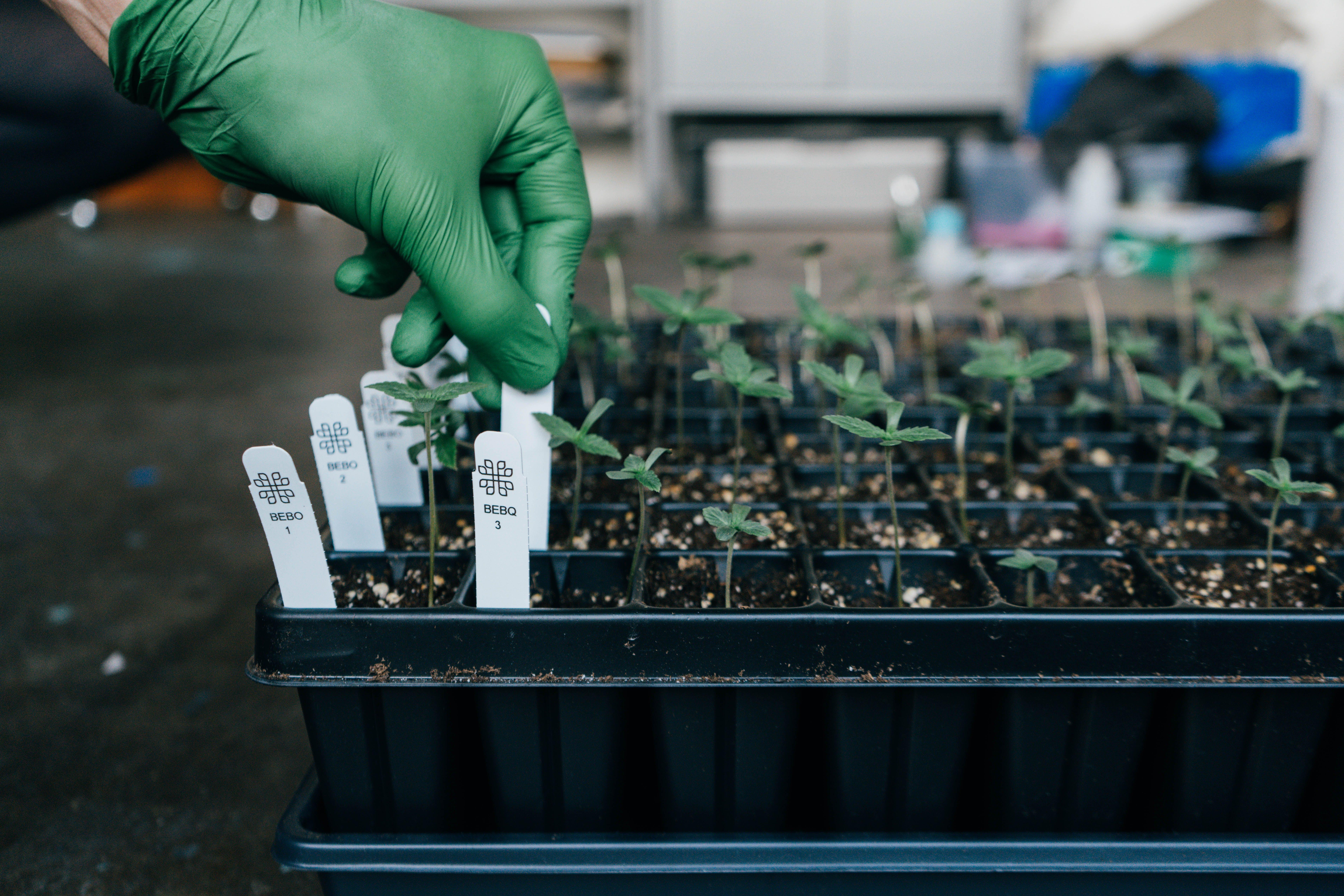 Plant sex test image