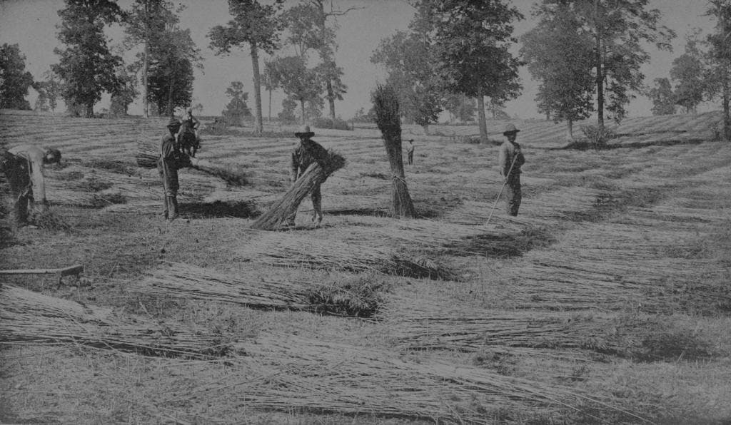 Kentucky Hemp Harvest, 1895. Image via Wikipedia.