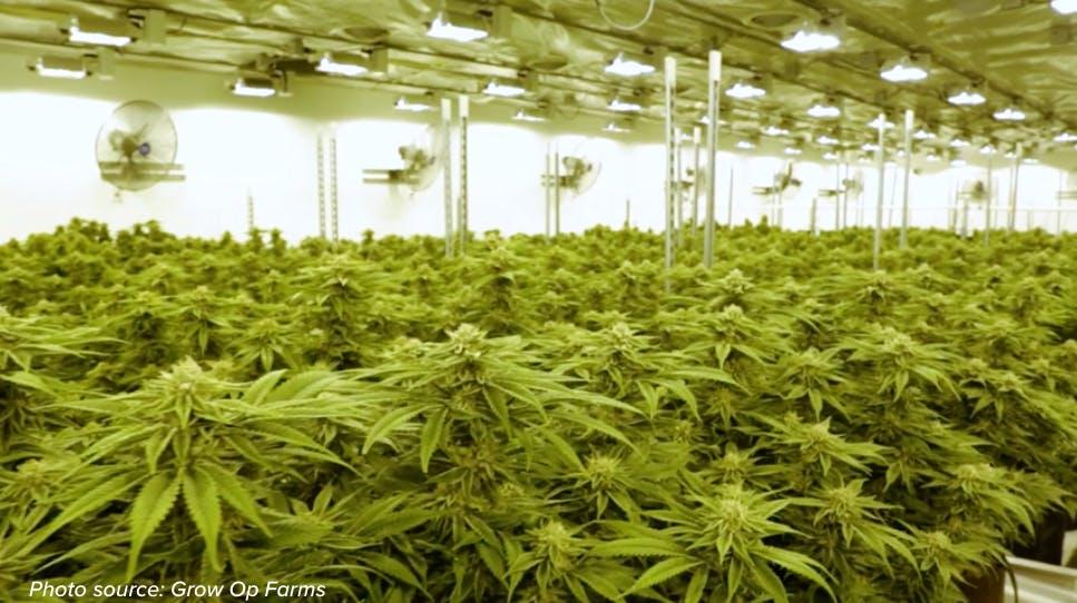 Grow Op Farms greenhouse interior