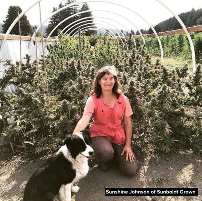 Sunshine Johnson from Sunbolt Grown