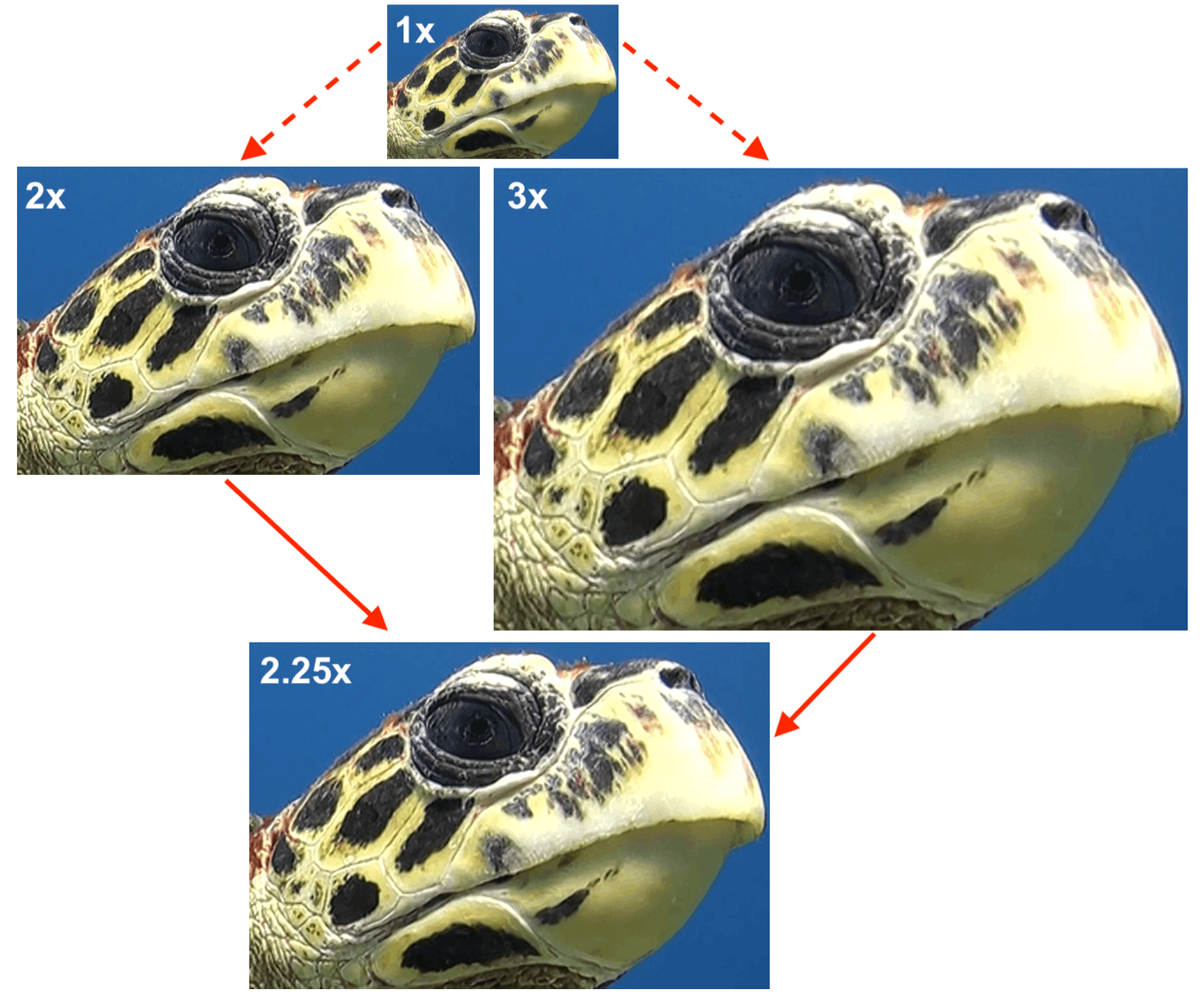 Composite image of upscaled turtle photos