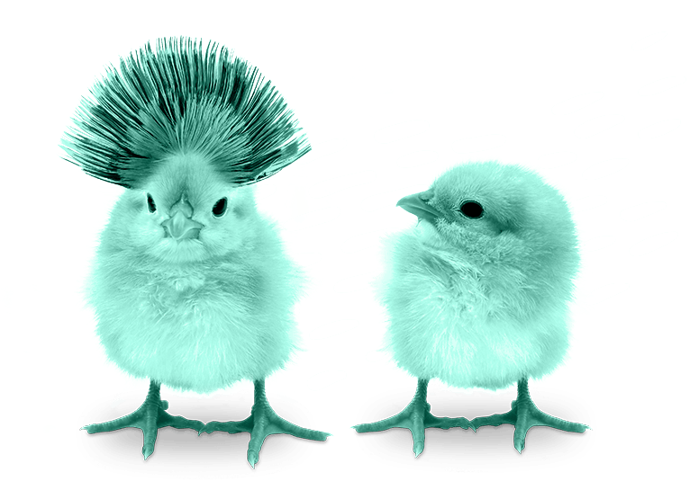 two baby chicks standing next to each other