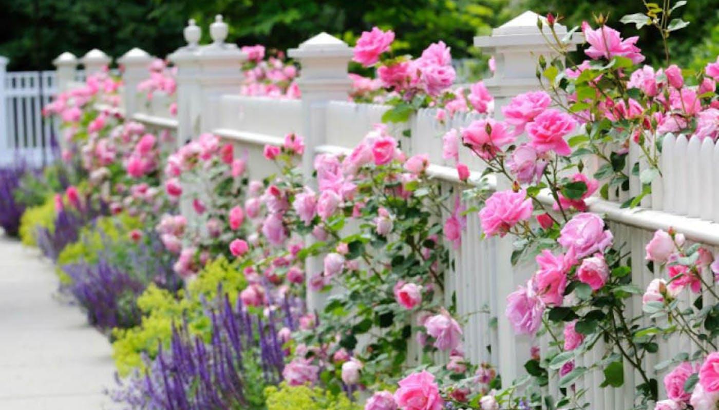 5 Idees De Cloture De Jardin En Bois Zoom Sur La Cloture Au Naturel