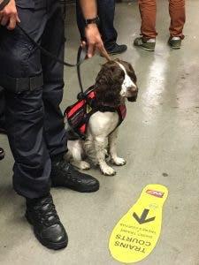 Agent cyno-détection avec son chien