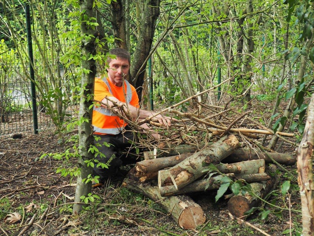 Personne travaillant avec du bois dans la forêt