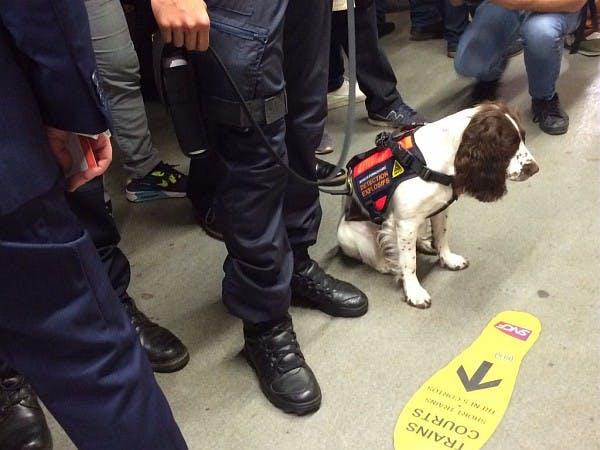 Agent cyno-détection avec un chien
