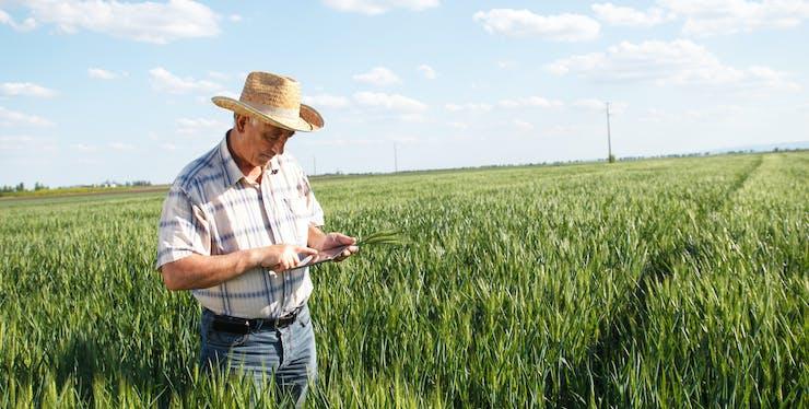 Internet rural: quais operadoras contam com opções?