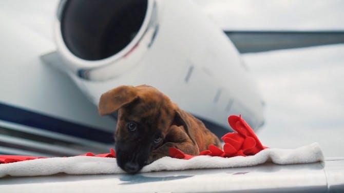 Pets on jet
