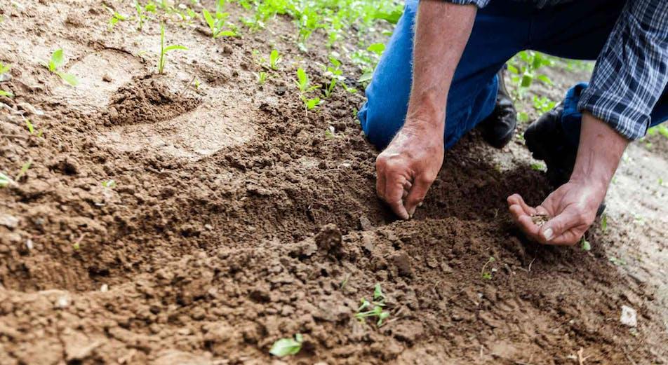 Guide: Plantering - välj rätt tidpunkt för bästa resultat