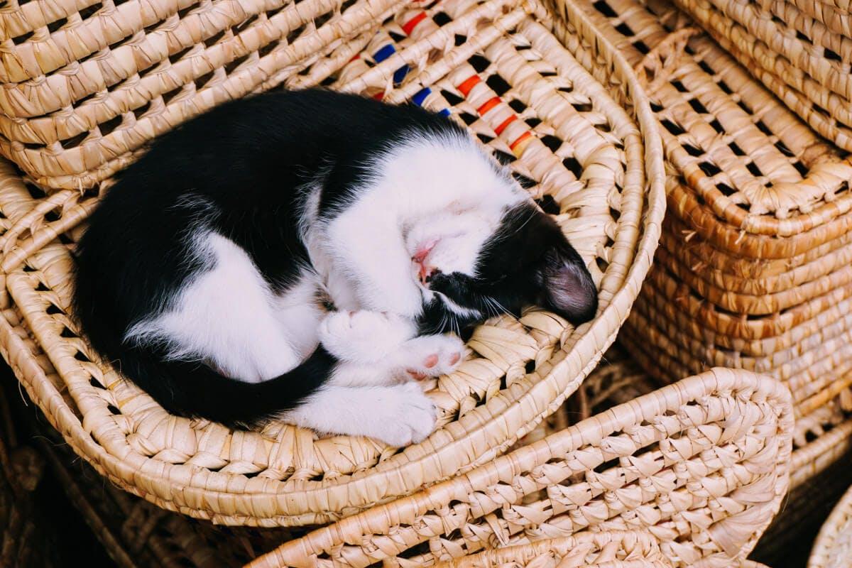 Schlafende Katze im Korb