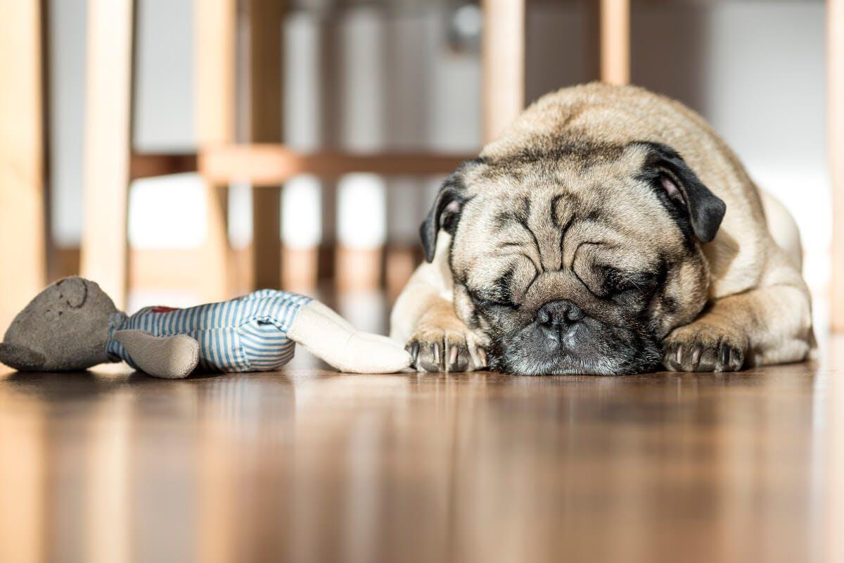 Am Bauch schlafen reduziert Schnarchen