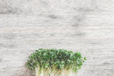 Antioxidantien Vorkommen in Lebensmitteln, Kresse