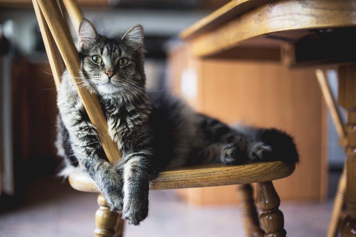 Muskelkater - oder die Tage danach. Katze sitzt auf Sessel