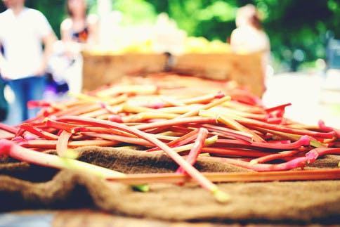 FoodCamp-meets-Pure-Encapsulations