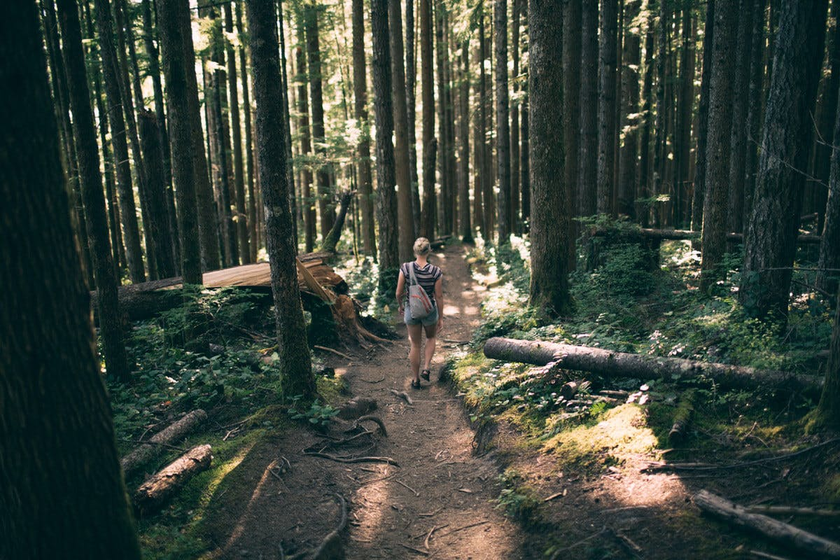 Waldbaden kann auch einfach ein ausgedehnter Spaziergang sein, hauptsache du entspannst dich