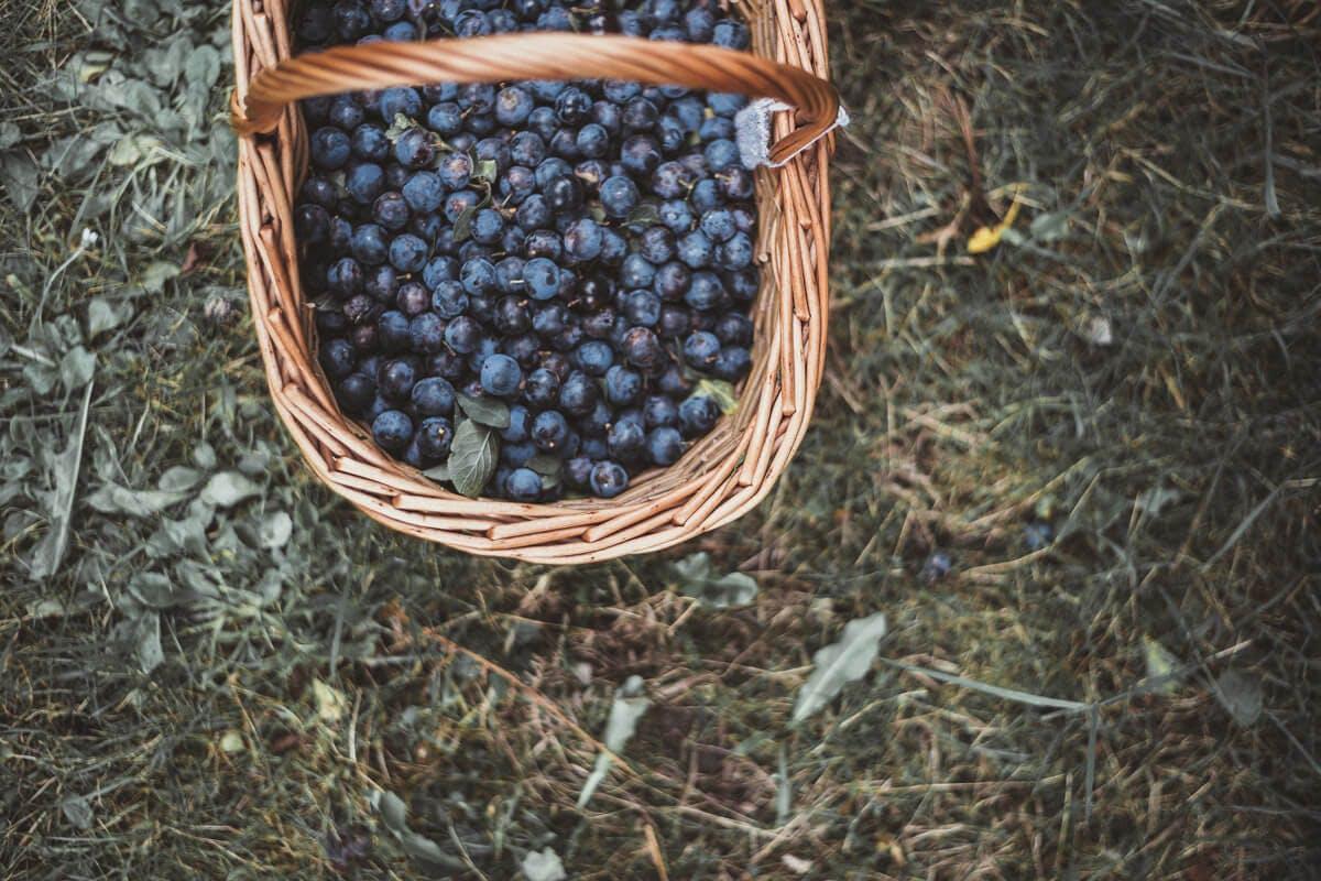 Blaubeeren in Korb