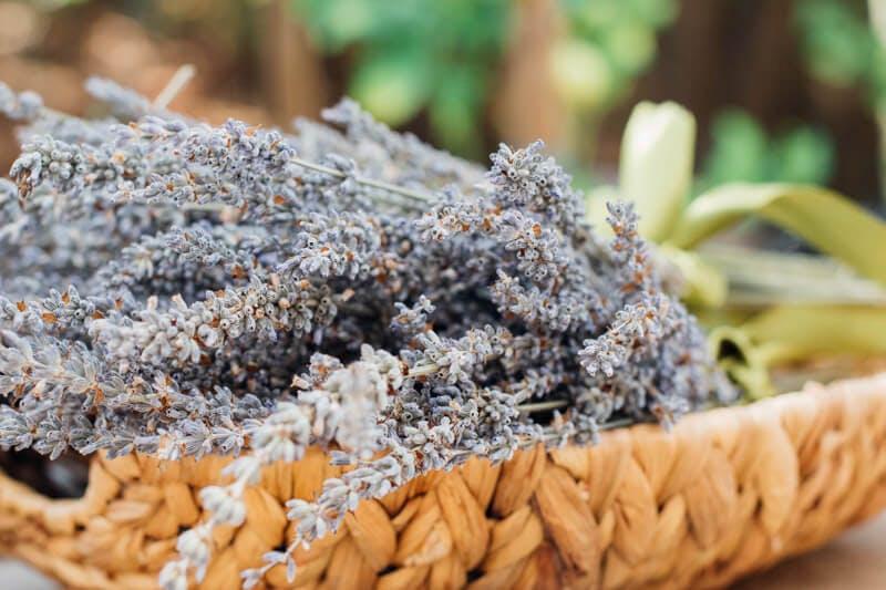 Aromatherapie als Stress Verordnung? Mit Lavendel lässt es sich besser Entspannen.