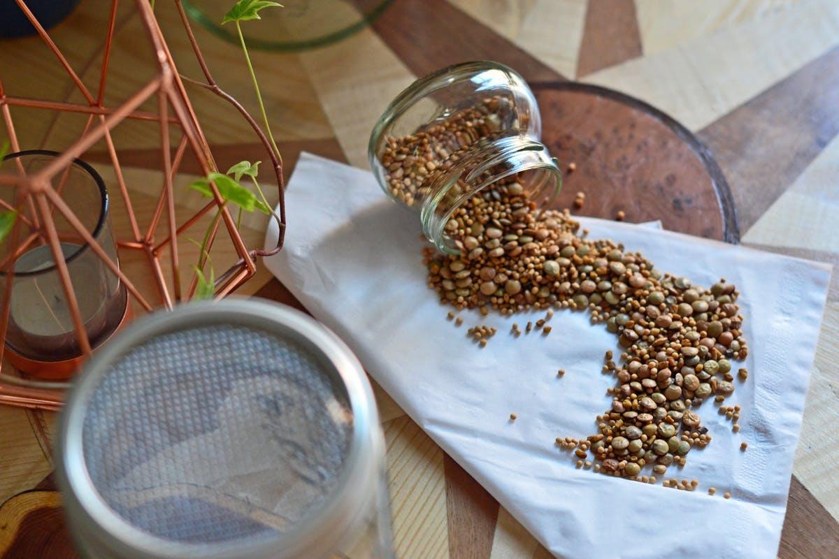 Samen für die Sprossenzucht