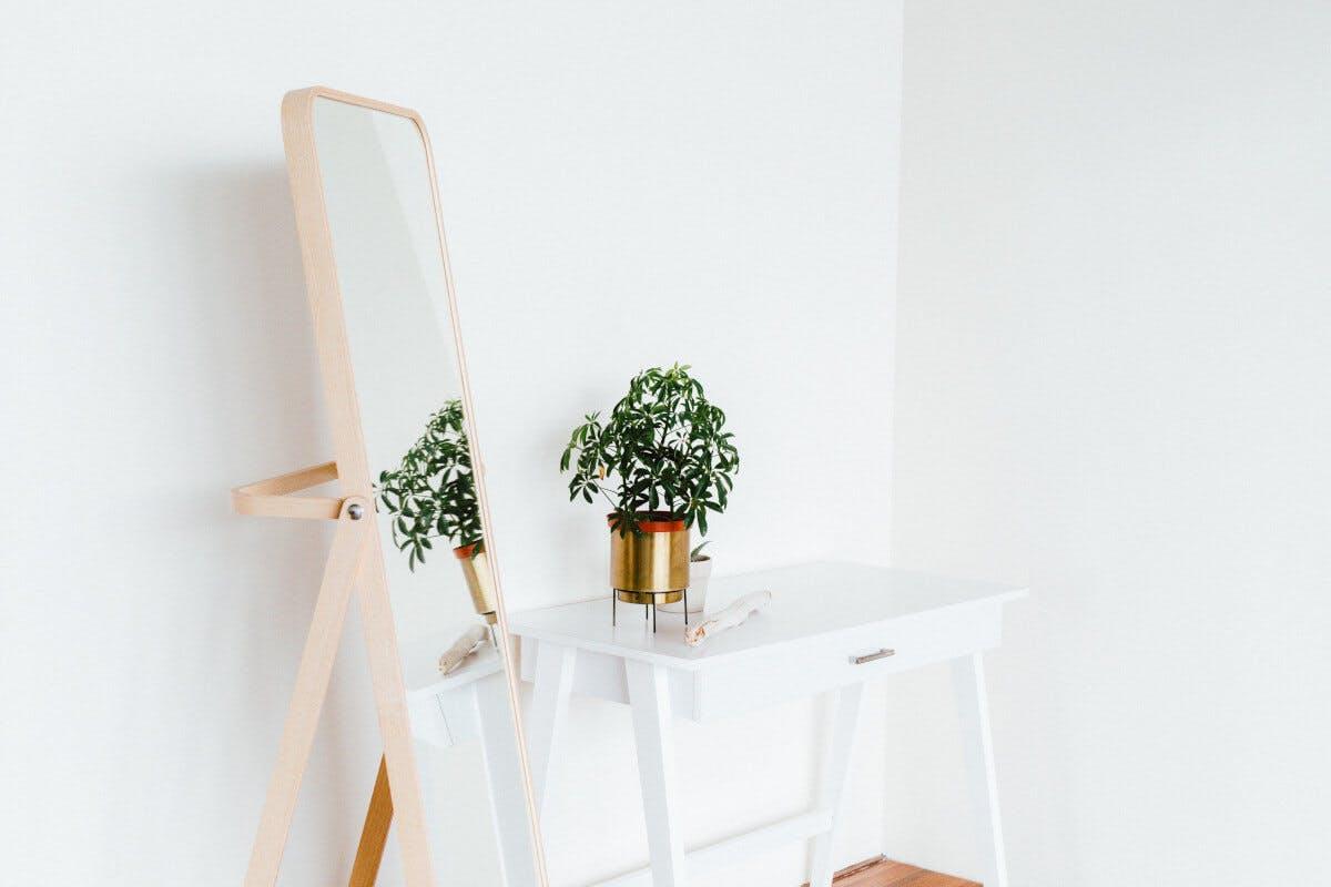 Grüne Pflanze steht auf einem Tisch vor einem Spiegel