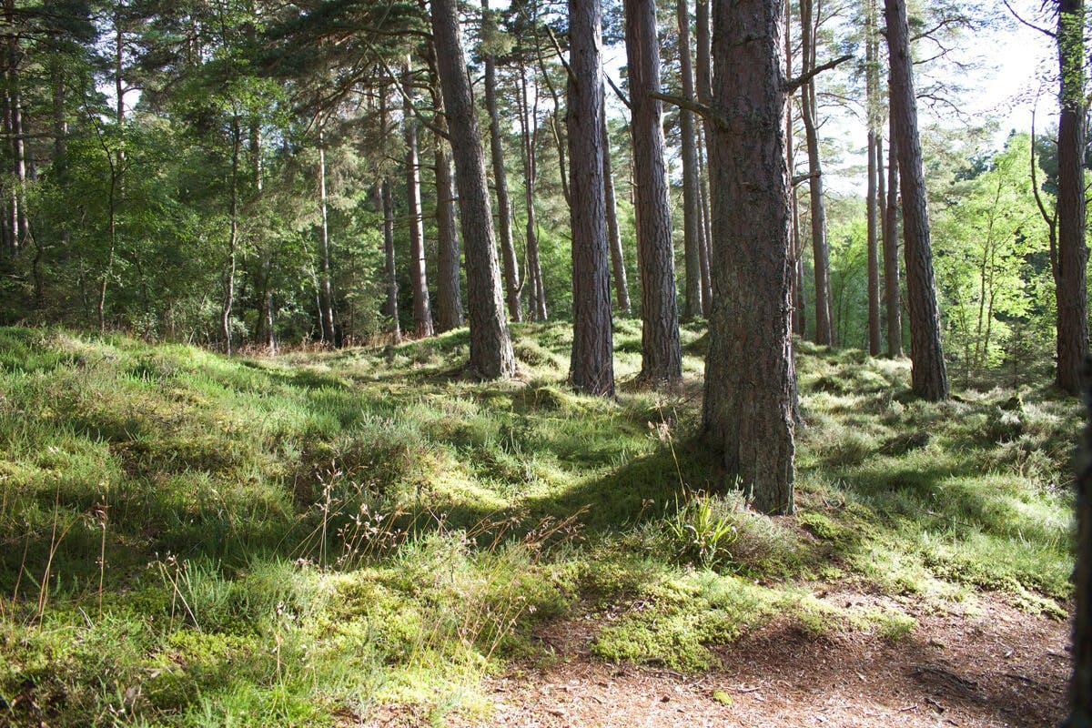 Die Natur wirkt positiv auf Körper und Geist, besonders im Wald