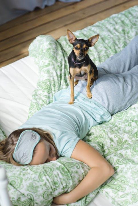 Schlaf: notwendige Ruhephase können gestört werden von Hunden