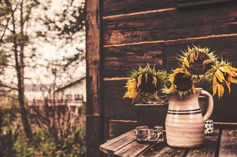 Verwelkte Sonnenblumen sind dem Oxidativen Stress zum Opfer gefallen.