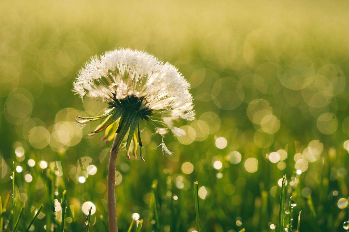 Wenn die Pollenbelastung im Freien besonders stark ist, sollte man sich am besten drinnen aufhalten.