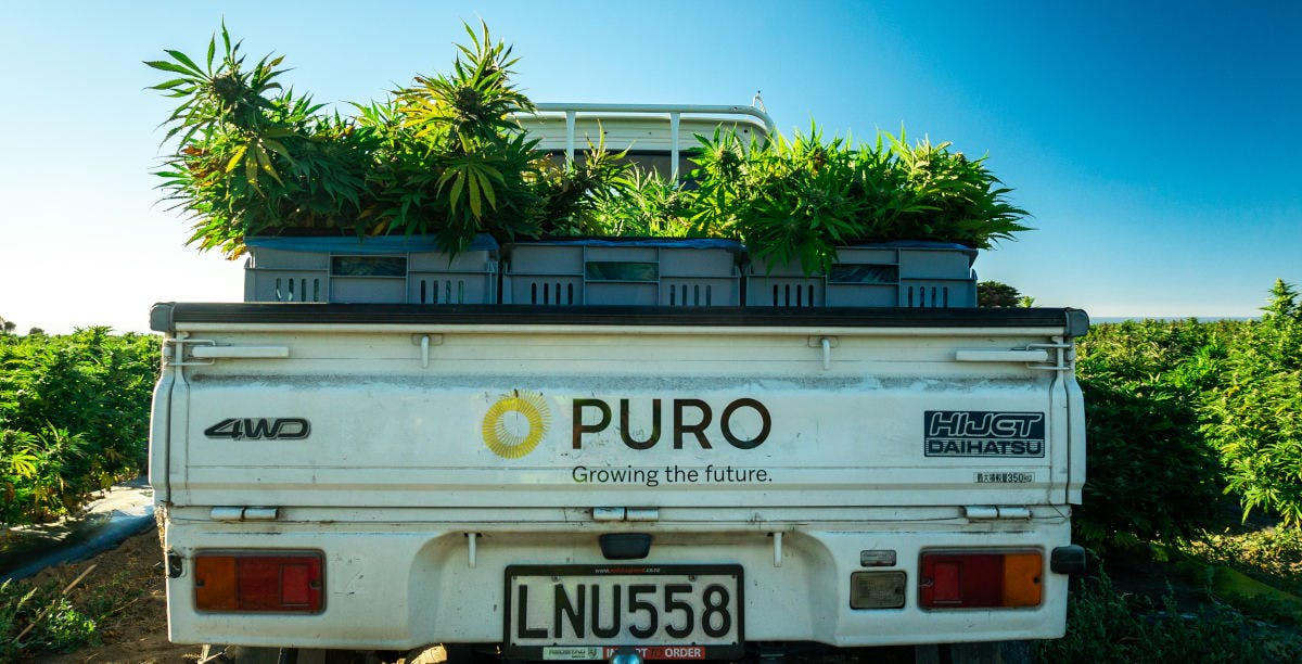 Truck Loaded with Medical Cannabis / Marijuana from Puro's Kēkerengū facility