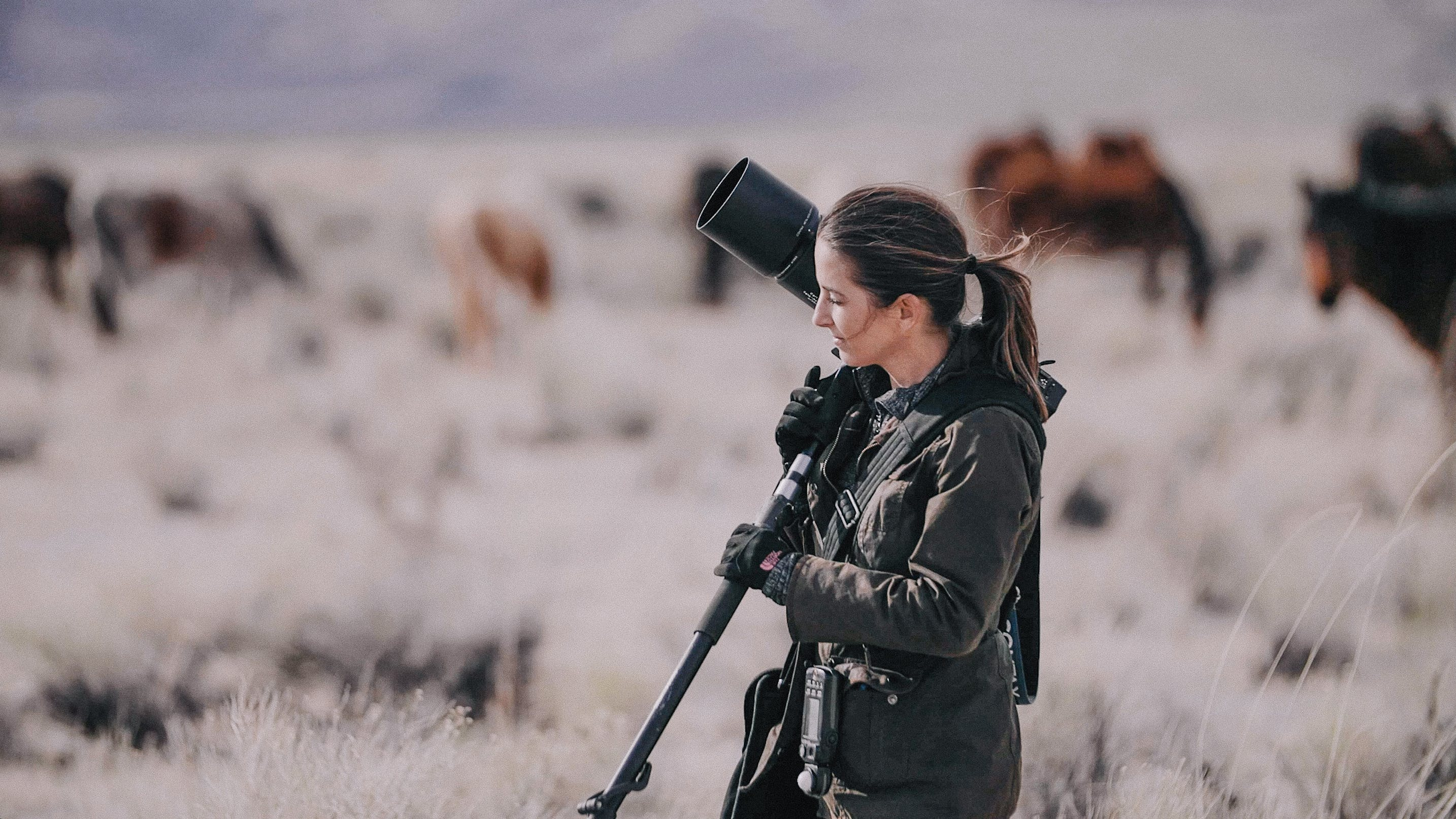 Professional wedding photographer KT Merry photographing her latest passion project; wild mustangs in Northern Nevada