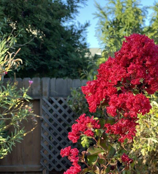 Red flowers in sunlight