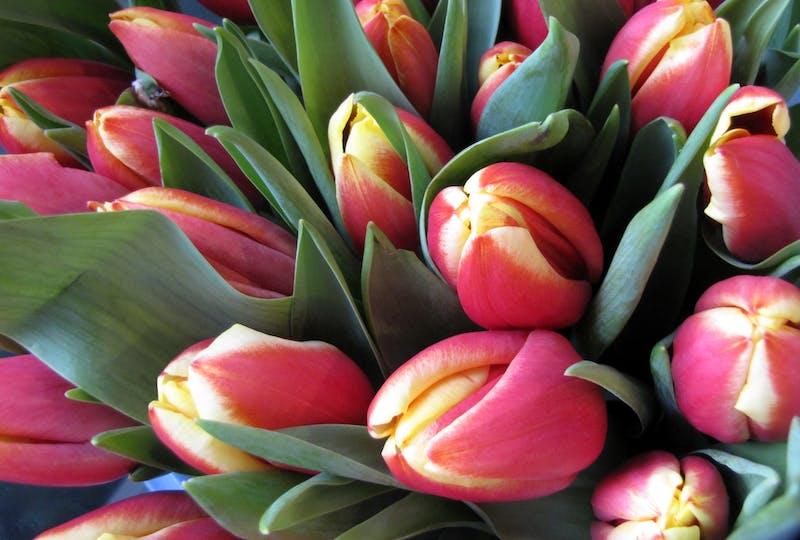 Pasen met bloemen vieren? Bestel je boeket nu en laat het bezorgen via Regiobloemisten houd je eigen paastraditie in ere met een fleurige bos bloemen banner.