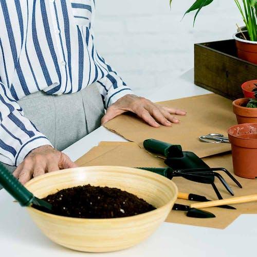 Bromelia verpotten en verplanten