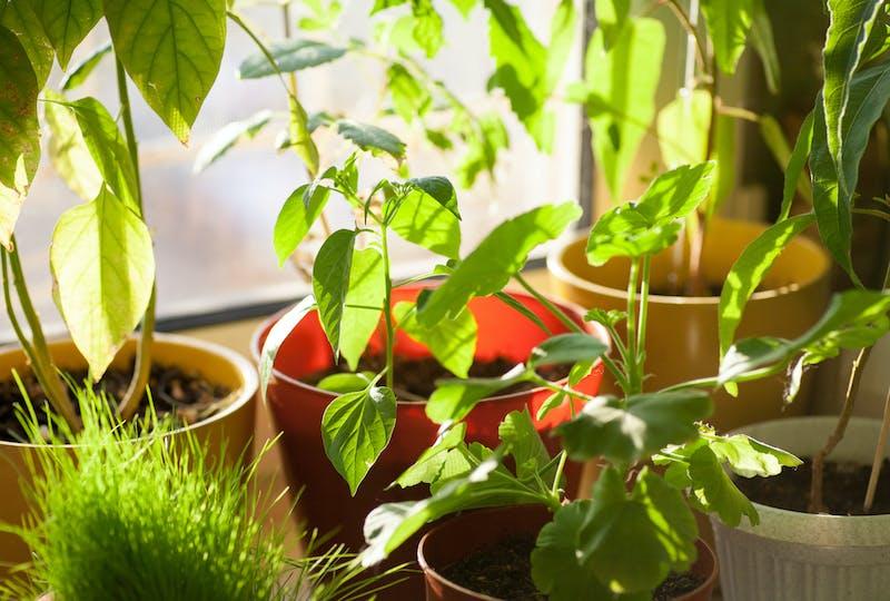 Kamerplanten in de zon
