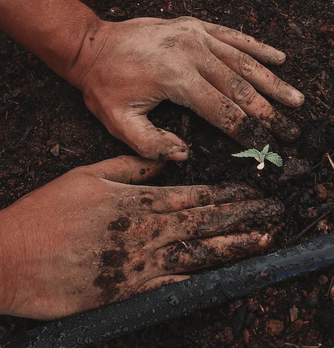 image-hands-plant-tree
