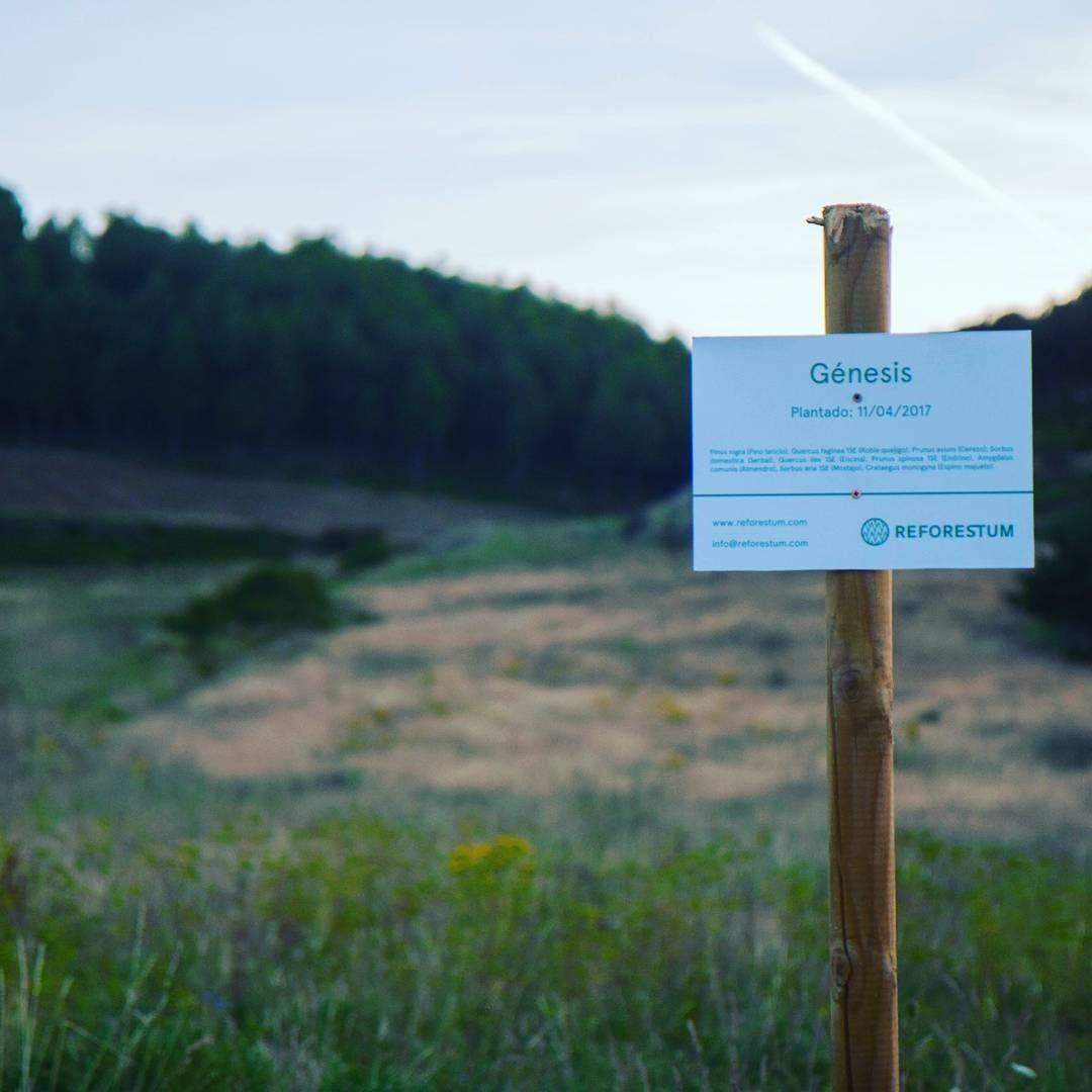 Cartel que identifica nuestro primer bosque, Genesis.