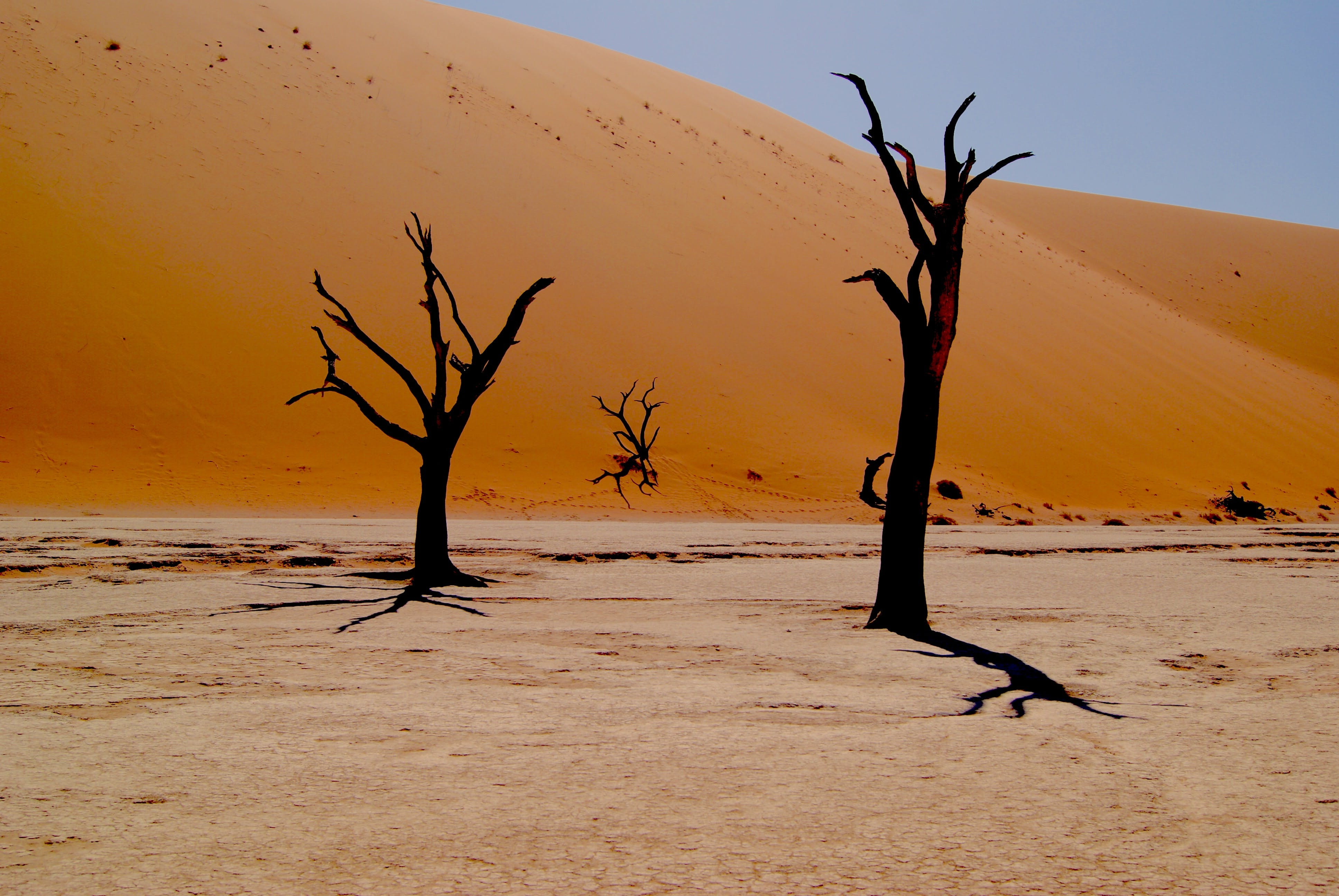 dry trees in a desertified environment