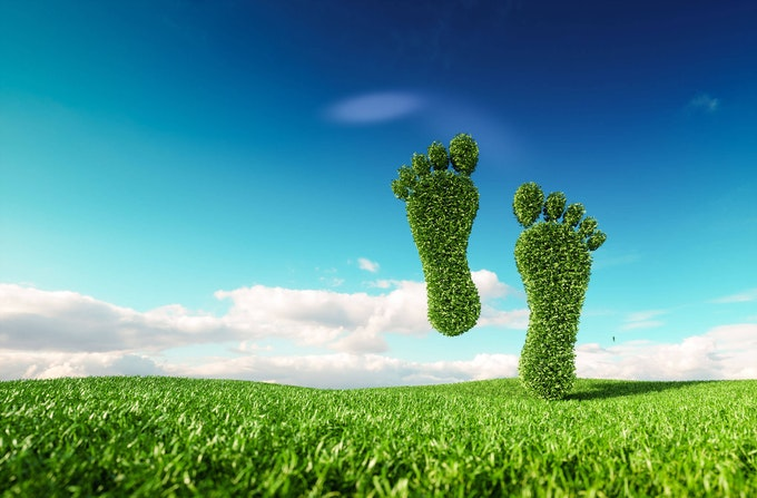 Rendering of a footprint formed by vegetation