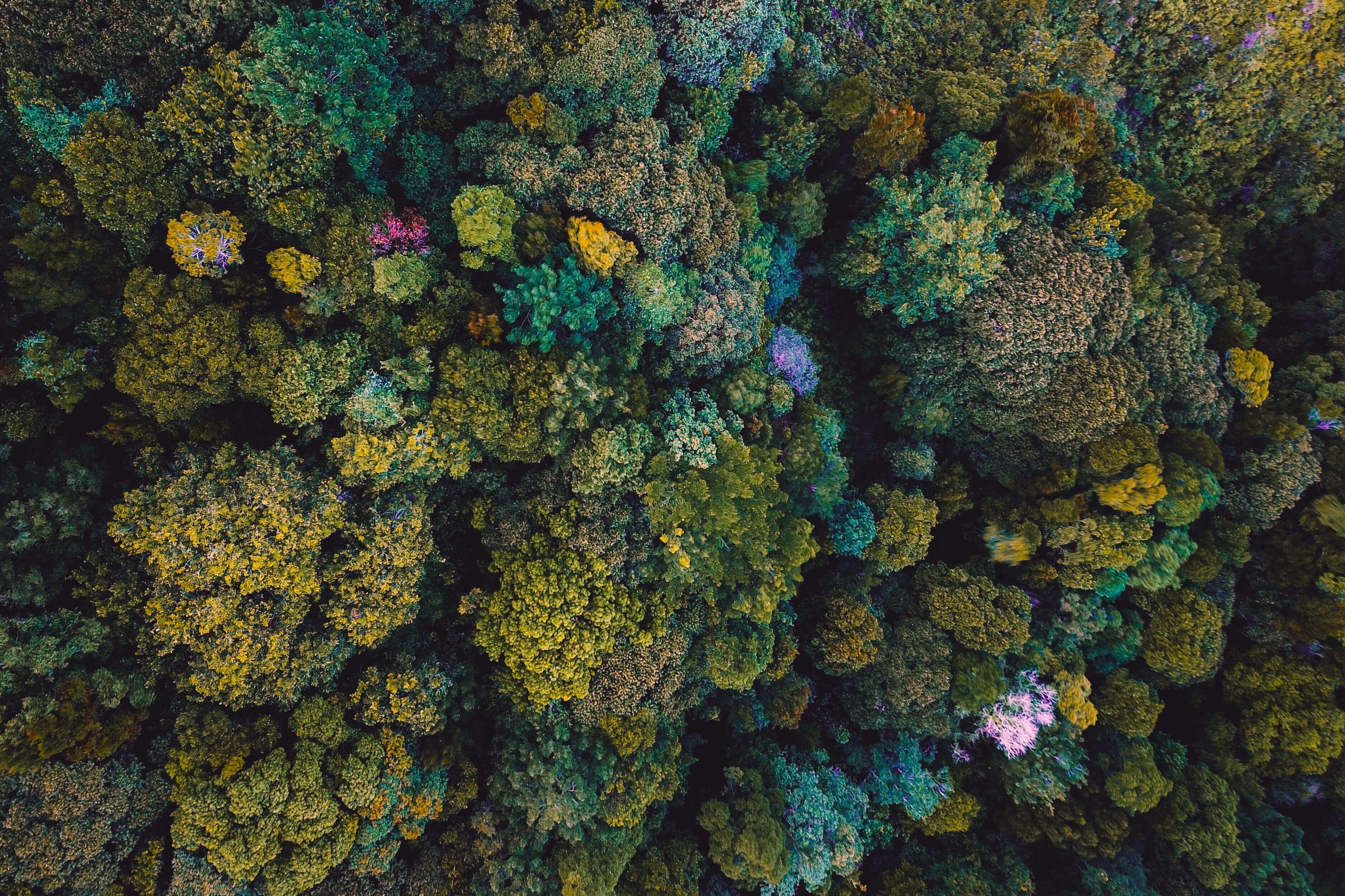 top view of a forest