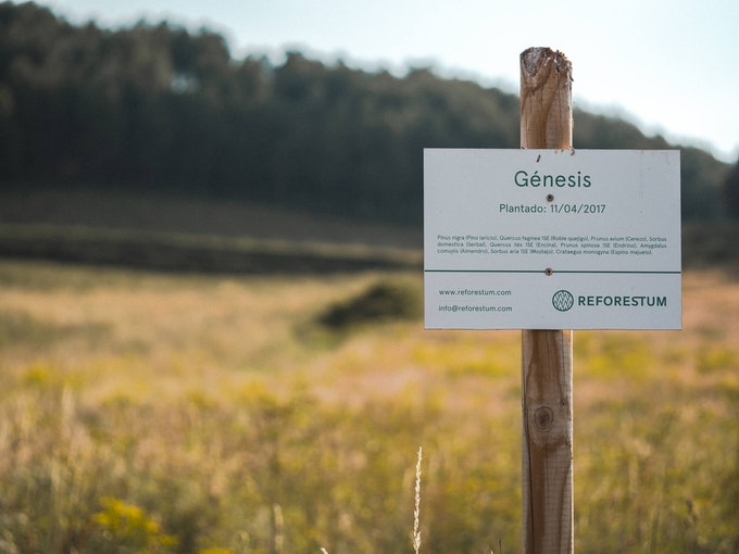 Sign identifying our first forest, Genesis.
