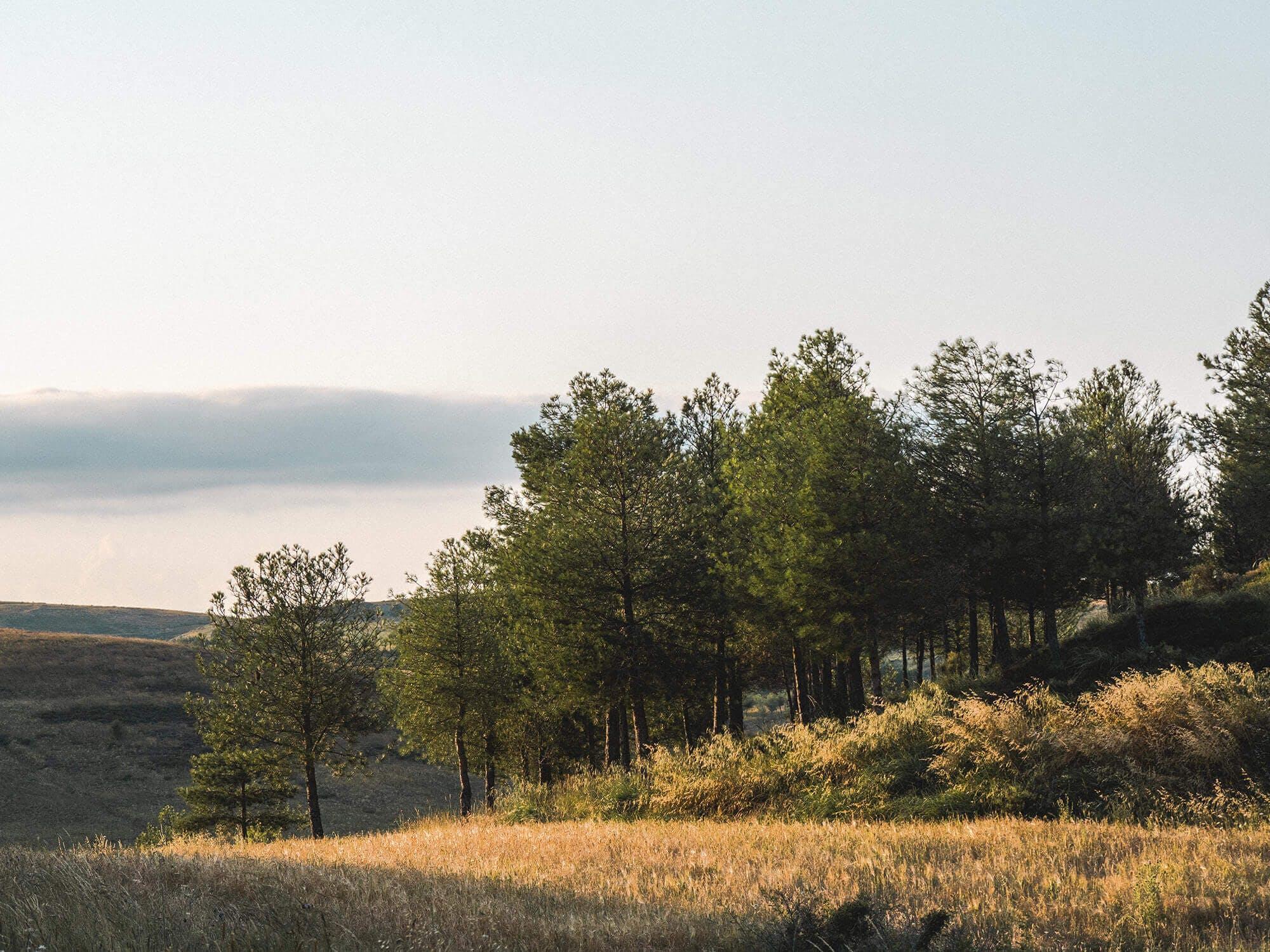 Genesis Forest
