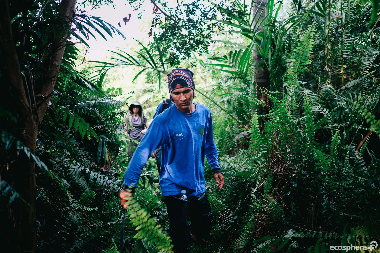 A man walks through the vegetation in Sumatra Merang