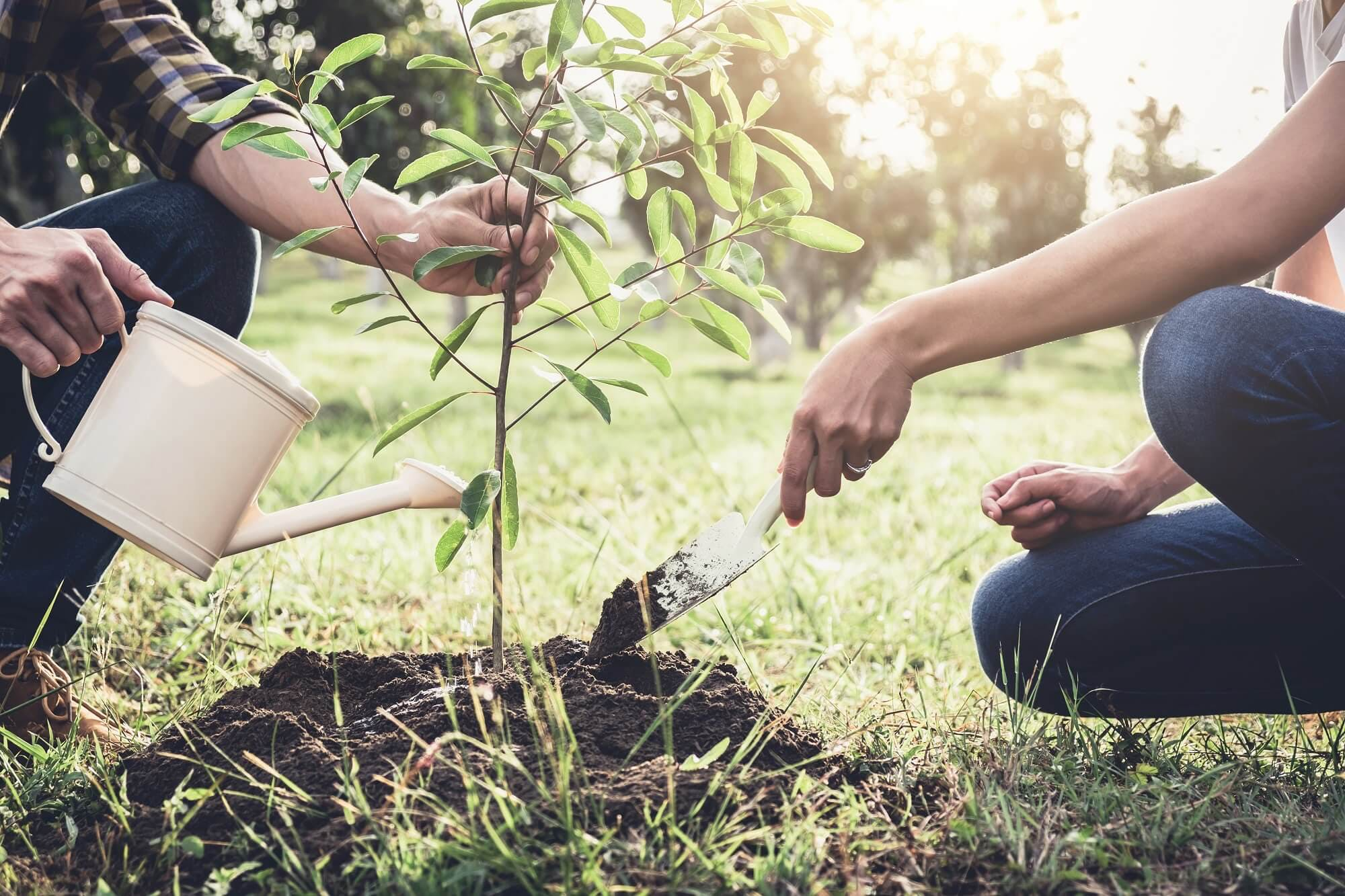 Two persons planting a tree