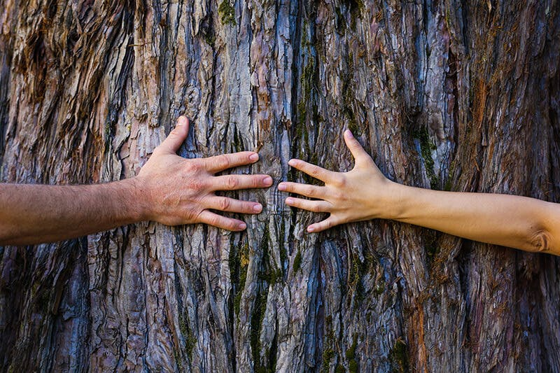 two people hugging a tree