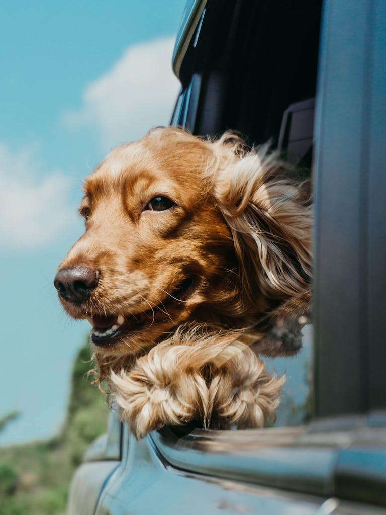 Über den Fahrtwind freut sich auch der tierische Begleiter.