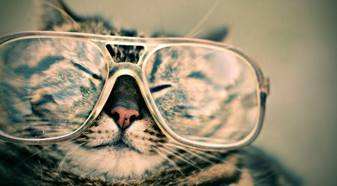 Cat wearing oversized reading glasses