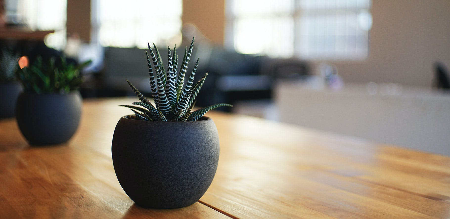 small cactus sitting on a table with a blurred background