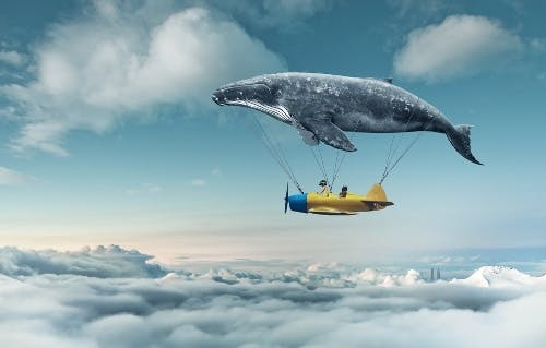 grey-whale-carrying-plane-in-sky