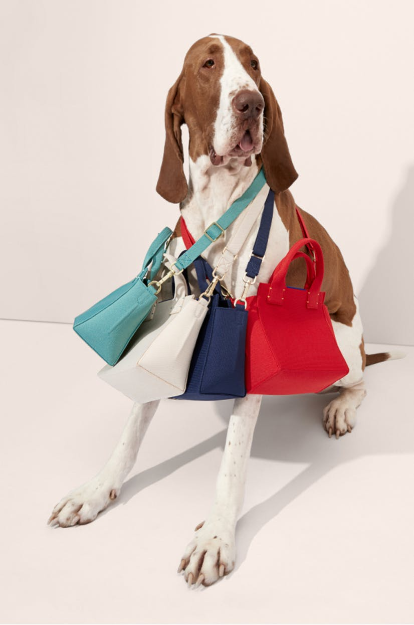 The Mini Handbag in Juniper Green, The Mini Handbag in Sea Salt, The Mini Handbag in Royal Blue and The Mini Handbag in Candy Apple shown on a dog.