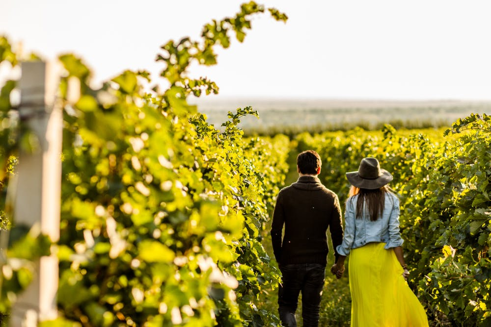 A couple holding hands while taking a stroll through the vineyards