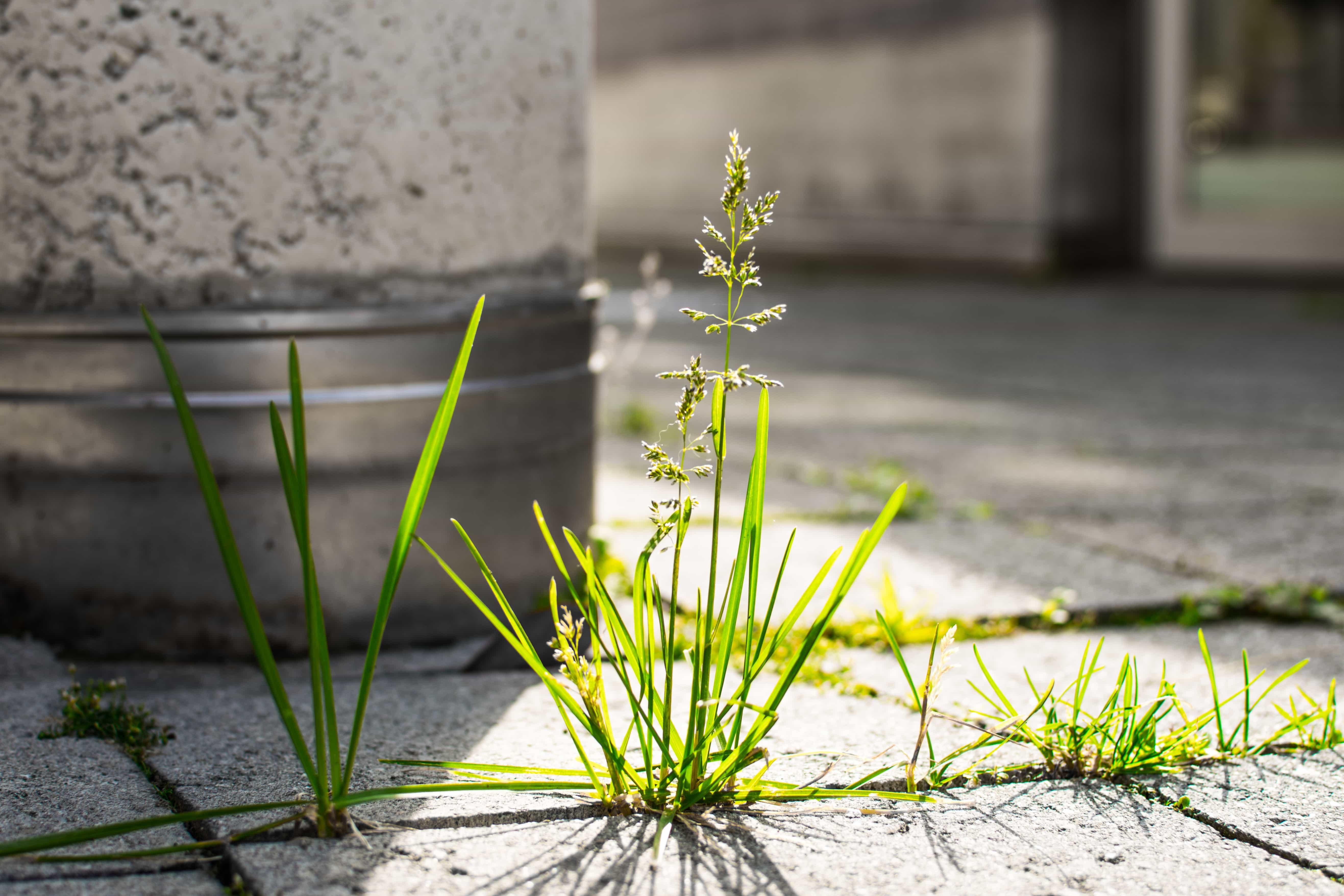 Quelle est la meilleure période pour traiter les mauvaises herbes ?